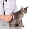 Ветеринарные клиники в Шемятино